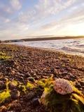 Пляж Mukilteo утесов и утихомиривать раковин стоковые изображения