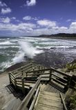 Пляж Muriwai колонии Gannet около пляжа отработанной формовочной смеси Окленда Стоковая Фотография
