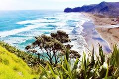 Пляж Piha стоковые фотографии rf