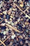 Пляж ` s рыболова вполне различных красочных seashells Стоковые Фотографии RF