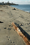 пляж seattle alki западный Стоковые Изображения