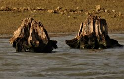 Пни возникают в пруде Стоковое Изображение RF