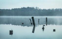 Пни в воде Стоковое Фото