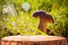 Пни дерева гриба леса предпосылки Стоковое Изображение