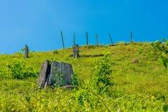 Пни дерева на горе с голубым небом Стоковое Изображение