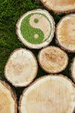 Пни дерева на траве с ying символ yang Стоковые Изображения
