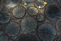 Пни дерева стоковые фотографии rf