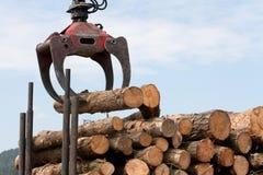 пни перевозят деревянное на грузовиках Стоковые Изображения RF
