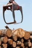пни перевозят деревянное на грузовиках Стоковое Фото