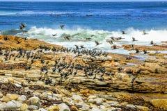 Побережье Атлантики птицы моря Стоковые Фото