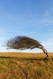 Побережье дерева на море. Стоковая Фотография RF