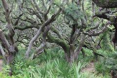 Побережье леса климакса Georgia Стоковые Изображения RF