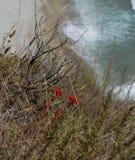 Побережье Калифорнии с естественным передним планом Стоковые Изображения