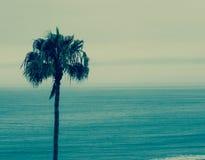 Побережье Калифорнии с пальмой Стоковые Фото