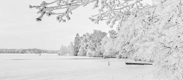 Побережье льда покрыло озеро и белые ледистые деревья стоковое фото
