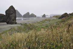 Побережье Орегона с одичалыми травами и туманом стоковые изображения