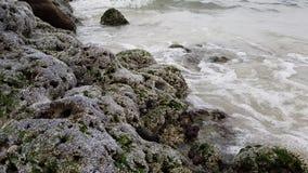 Побережье Персидского залива покрыто с утесом раковины видеоматериал