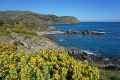 Побережье Пиренеи Orientales Франция Средиземного моря стоковые изображения rf