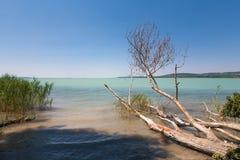 Побережье Balaton озера на покинутом месте с тростником и деревом le Стоковые Изображения