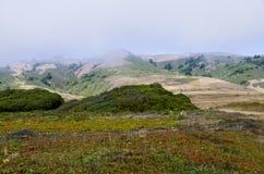 Побережье Bodega Стоковое Изображение RF