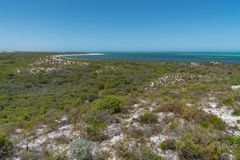 Побережье, Cervantes, западная Австралия Стоковая Фотография