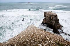 Побережье Muriwai - Окленд - Новая Зеландия Стоковая Фотография RF