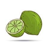Побелите плодоовощ и куски известью изолированные на белой предпосылке Стоковое Фото