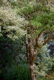 Побледнейте листья на чувствительных ветвях благоустраивая 2 Стоковая Фотография