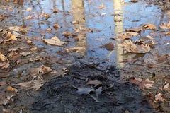 поверхностная вода листьев осени Стоковое Фото