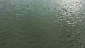 поверхностная вода акции видеоматериалы