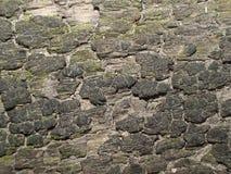 поверхностная древесина Стоковая Фотография RF