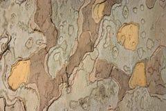поверхностная древесина Стоковые Изображения RF