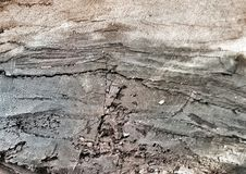 поверхностная древесина Стоковое Фото