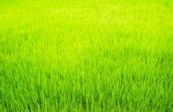 Поверхностная трава Стоковое Изображение RF