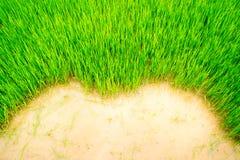 Поверхностная трава Стоковые Изображения RF