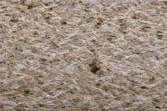 Поверхностные хлебы хрустящей корочки рож Стоковое Изображение RF