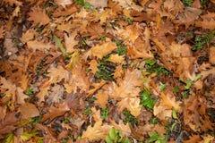 Поверхность влажных листьев осени стоковые изображения rf
