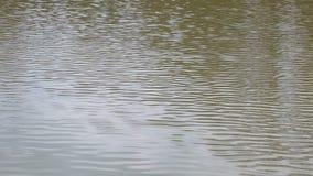 Поверхность воды - замедленное движение сток-видео