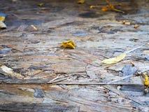 Поверхность доски сделана деревянных shavings Стоковое фото RF