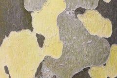 Поверхность дерева в осени в желтом цвете и зеленом цвете Стоковые Изображения RF