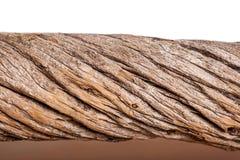 Поверхность дерева с предпосылкой Стоковая Фотография