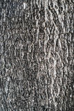 Поверхность дерева Стоковое Изображение