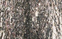 Поверхность дерева Стоковое фото RF