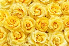 Поверхность желтых красивых роз Стоковые Фотографии RF
