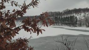 Поверхность замороженных озера и ветви акции видеоматериалы