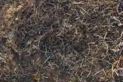 Поверхность земли покрытой с золой стоковое фото rf
