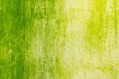 Поверхность зеленого мха на стене Стоковые Изображения RF