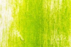 Поверхность зеленого мха на стене Стоковое Изображение