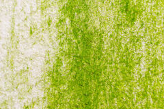 Поверхность зеленого мха на стене Стоковое Фото