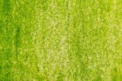 Поверхность зеленого мха на стене Стоковая Фотография RF